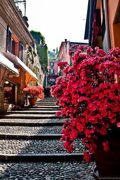 Bellagio - Lake Como, Italy  arrivo subito per prendere l'aperitivo con @Paola Bee Bee Bee Bee Bee Gambetti