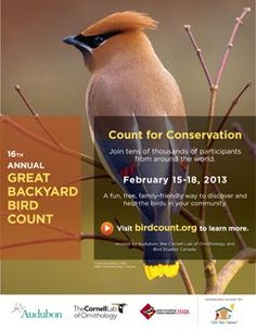 Missed the Christmas Bird Count? Here's one you can do right in your own backyard! Join the Great Backyard Bird Count Feb. 15 - 18, 2013.