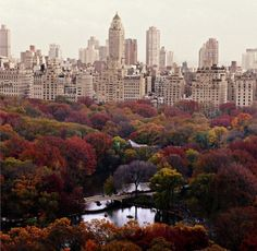 Central Park #NYC #fall #autumn #foliage #leaves #nature #city