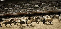 One of the most exciting events at the Cheyenne Frontier Days rodeo is the Wild Horse Race! http://www.cheyenne.org/listings/index.cfm?action=display&listingID=1016&menuID=65&hit=1
