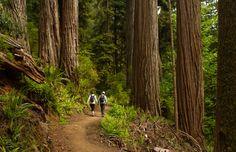 redwood nation, nation park, unbeliev tree, national parks, beauti creation, place, heavi fog