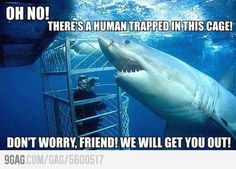 sharks are helpers!