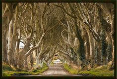 20 Photos of Tree Tunnels That You Must Walk Through It
