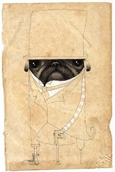 Snazzy pug