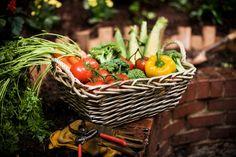 Vegetable Harvesting Tips