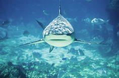 shark bait, sharkweek, shark week