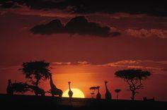 The #Masai #Mara -- #Kenya