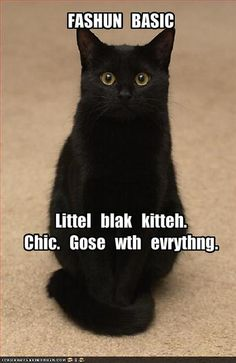 LBC - little black cat, what every girl needs