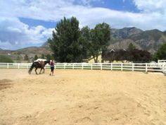 Clinton Anderson Lunging For Respect Stage 1 & 2 - YouTube