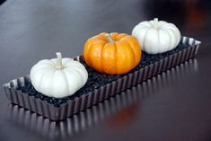 Halloween pumpkin centerpiece - low tray of black beans to display little pumpkins