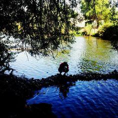 River in Hart Park, Bakersfield, CA   It's Bakersfield's own wilderness.