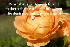 heart, trees, earth, proverb 3024