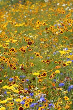 Wild flowers | Flickr - Photo Sharing!