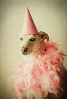 CORAL BLUSH, party girl pooch