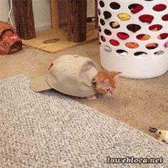 Kitten - Turtle