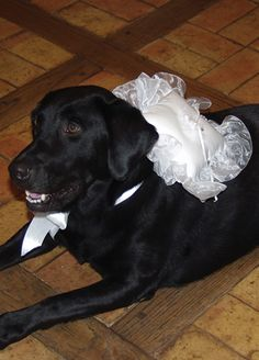 idea, ring pillows, dogs, dog cat, pets, doggi ring, ring bearer pillows, dog ring, bearer dog