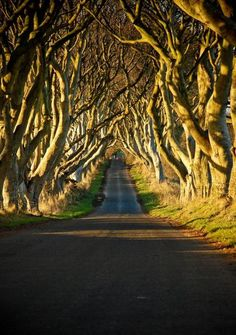 The Dark Hedges, Bregagh Road, Northern Ireland