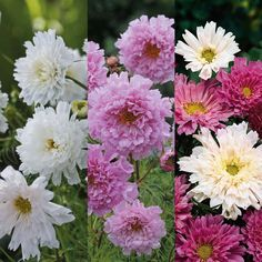garden plant, cottag garden, garden dream