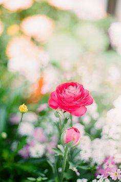 spring flowers...