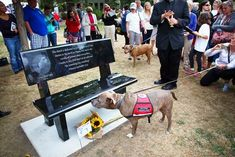 The Puppy Doe bench is dedicated in loving memory to the dog who was so cruelly deprived of happiness and life itself, and to the effort to combat animal abuse and abusers.  <3 rest in peace.