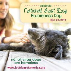 A volunteer network has used social media to reunite thousands of lost dogs with their families. They've designated Wednesday as National Lost Dog Awareness Day because not all stray dogs are homeless.