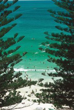 main beach, tree