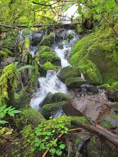 Beautiful waterfall in the forest of the Sierra Norte in Oaxaca, Mexico.  www.mountainbikeworldwide.com/bike-tours/mexico #adventure #bike