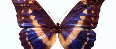 beauti butterfli, hypothyroid, style, butterflies, thyroid health