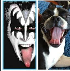 If gene Simmons was a dog