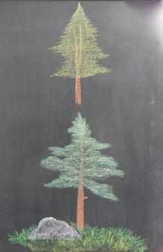 Chalkboard Drawings -trees