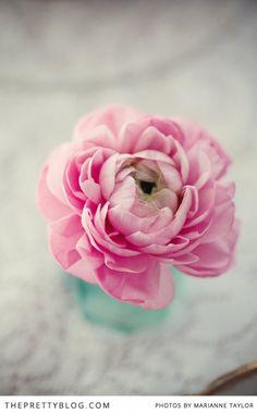 fleur, tea parti, pink flowers, soft pink, pretti blog, bloom, pink peonies, floral, beauti flower