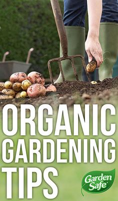 Learn more about organic gardening tips here. #organic #garden #tips