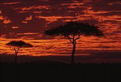 Masaai Mara, Kenya by _desertsky, via Flickr