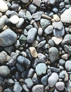 rock unit study