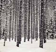 Winter in Michigan upper peninsula.