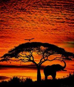 anim, dream, eleph, bucket, art, natur, beauti, africa, photo