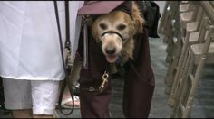 Girl Credits Service Dog For Helping Her Through High School - Philadelphia News, Weather and Sports from WTXF FOX 29 servic dog, fox 11, service dogs, fox 29