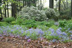 04-19-woodland-garden-structure