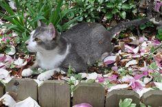 Natural Cat Deterrents for Gardens