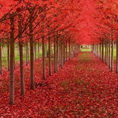 Autumn trees, Japan