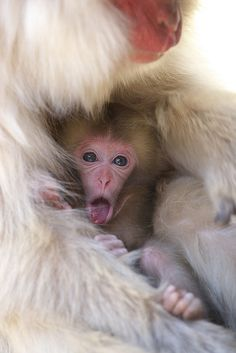 What a cute baby macaque!