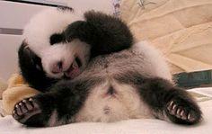 China | Baby Animal Zoo