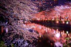 Cherry Blossom Trees  #upliftingphilosophy @philosophy skin care
