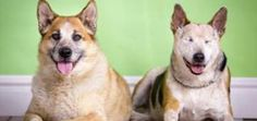 Anybody Want to Adopt an Adorable Blind Dog AND His Seeing-Eye Dog?   Dogster