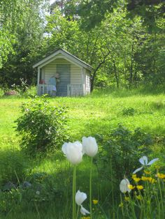 Gorgeous spring garden-love the shed!