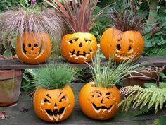 Halloween pumpkins with plants