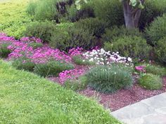 Drifts of sea thrift make an excellent border plant in a French landscape design. Designed by Miller Design Group in Stanwood, WA.