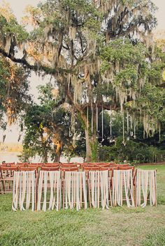 beribboned chairs mixed with spanish moss at this gorgeous Charleston wedding  Photography by http://doveandsparrow.com/