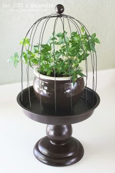 Follow along with blogger Stacy Risenmay from Not Just a Housewife as she demonstrates how to build your own cute wire plant cloche for just $15! || @stacyrisenmay