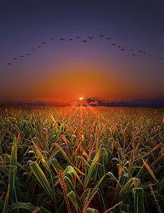 Sunrise Field, Wisconsin  photo via beautiful